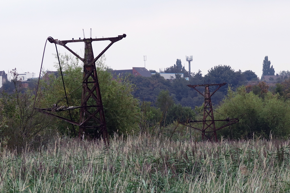 Industry once claimed the Swanscombe Marshes, but nature has rewilded the landscape