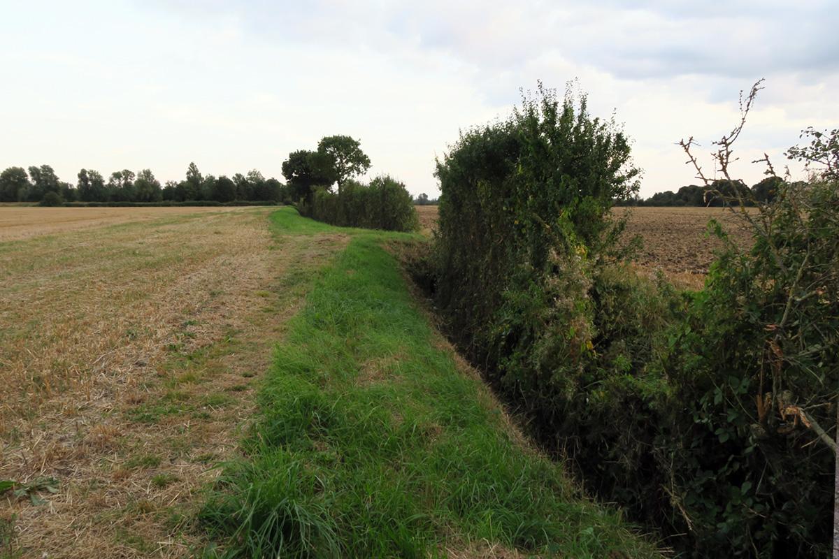 A narrow ditch between fields