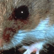 CRITTER CONTROL / WILDLIFE REMOVAL SERVICES