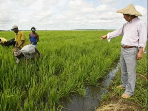 Le continent africain s'inspire de l'agriculture chinoise