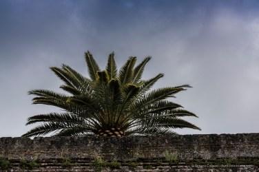 Alhambra, Granada, aprile 2015 - Nikon D810, 85mm (85.0mm ƒ/1.4) 1/400sec ƒ/5.6 ISO 64
