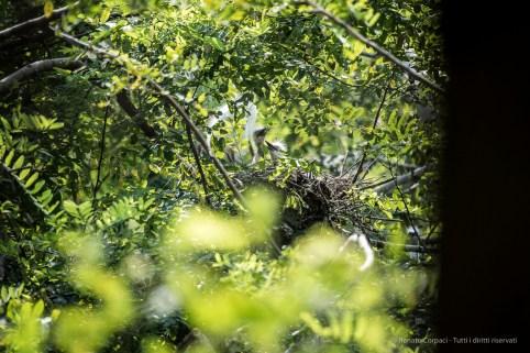 Trino Vercellese, nido di trampoliere. Nikon D750, 400mm (80-400.0mm ƒ/4.5-5.6) 1/1000 ƒ/5.6 ISO 800
