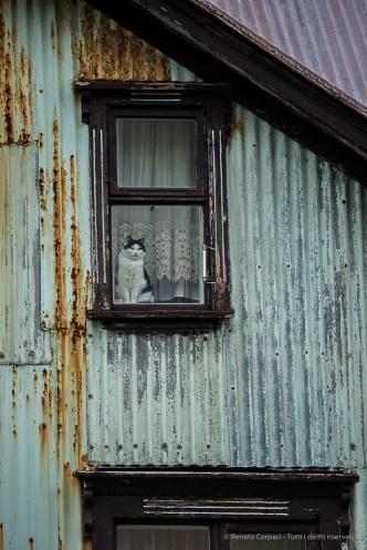 Cat staring from a window in Ísafjörður. Nikon D750, 400 mm (80-400.0 mm ƒ/4.5-5.6) 1/200 sec ƒ/5.6 ISO 800