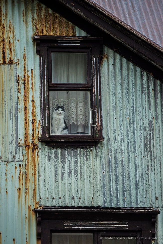 Cat staring from a window in Ísafjörður. Nikon D750, 400 mm (80-400.0 mm ƒ/4.5-5.6) 1/200 sec ƒ/5.6 ISO 800
