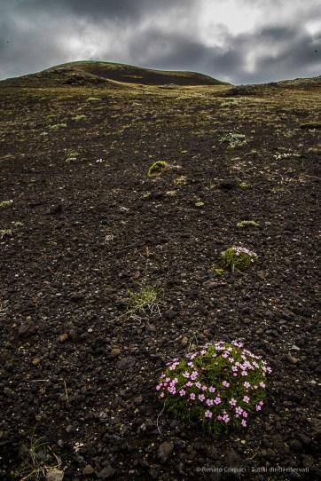 Sandur flowers. Nikon D810, 24 mm (24-120.0 mm ƒ/4) 1/8 sec ƒ/22 ISO 64