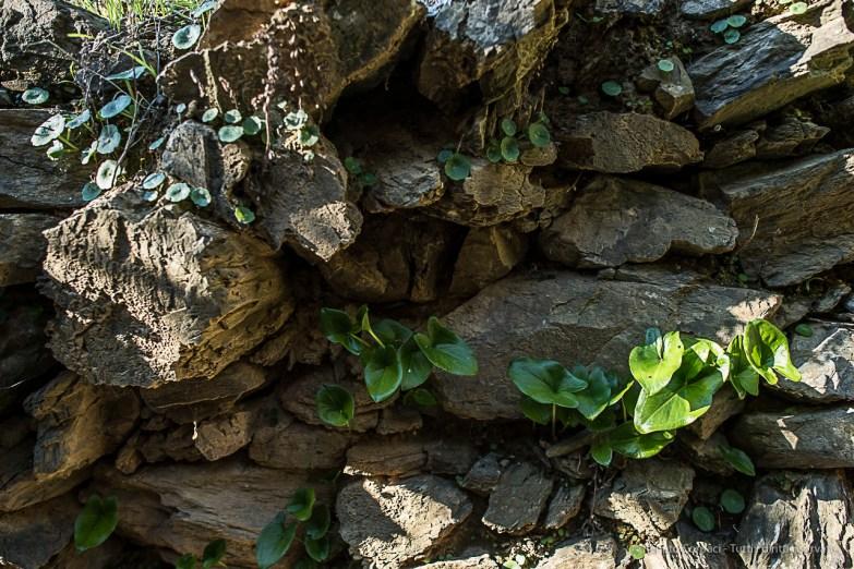 Vegetation along the trail. Nikon D810, 24mm (24 mm ƒ/1.4) 1/100 sec ƒ/2.8 ISO 64