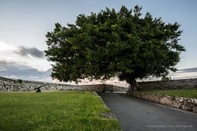 """A secular tree in the Castillo del Morro. Nikon D810, 20 mm (20.0 ƒ/1.8) 1/13"""" ƒ/9 ISO 64."""