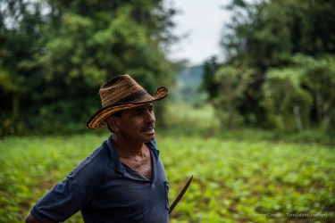 "Fulgenzio in front of a tobacco field. Nikon D810, 120 mm (24-120.0 ƒ/4) 1/1000"" ƒ/4.0 ISO 400"