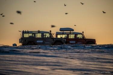 """Our Land Rovers surrounded by a flock of birds on the beach near Þikkvibær. Nikon D750, 400 mm (80-400.0 mm ƒ/4.5-5.6) 1/1000"""" ƒ/5.6 ISO 100"""