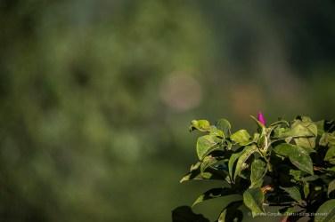 "Infiorescenza estiva di una magnolia. Nikon D810, 600 mm (Sigma 150-600 ƒ/5-6.3) 1/160"" ƒ/6.3 ISO 64"
