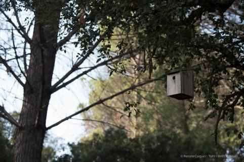"""El Rocío, Los Cabezudos, Parco di Doñana. Nikon D750, 120 mm (80-400 mm ƒ/4.5-5.6) 1/100"""" ƒ/6.3 ISO 100"""