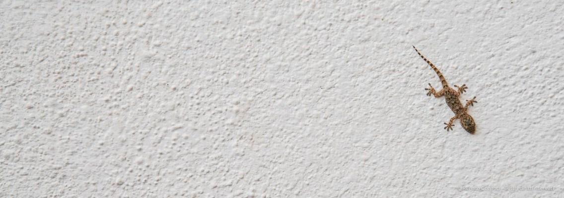 "A gecko on a wall of a house in El Rocío. Nikon D810, 120 mm (24-120.0 mm ƒ/4) 1/160"" ƒ/8 ISO 64"