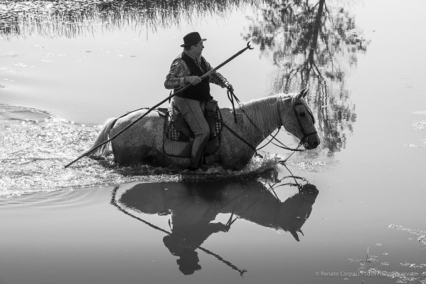 "Mas de la Pineda, Camargue: a ""guardian"" attending a herd of cattle. September 2014. Nikon D810, 112 mm (80-400.0 ƒ/4.5-5.6) 1/1250"" ƒ/ 13 ISO 1000"
