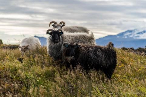 """Four friends. Búðir, Snæfellsnes (Iceland), August 2015. Nikon D810, 120 mm (24-120.0 mm ƒ/4) 1/400"""" ƒ/4.5 ISO 64"""