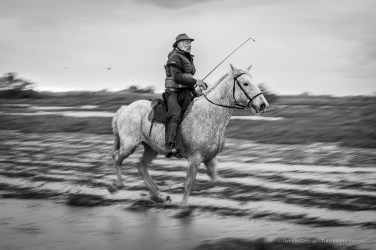 Pointe de Cacharel. Camargue, 2018. Nikon D750, 80 mm (80-400 mm ƒ/4.5-5.6) 1/40 ƒ/5.6 ISO 560