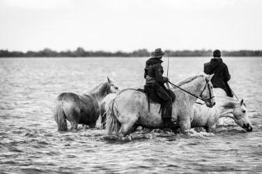 Pointe de Cacharel. Camargue, 2018. Nikon D750, 400 mm (80-400 mm ƒ/4.5-5.6) 1/800 ƒ/5.6 ISO 1000