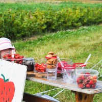 Latest Video: Strawberry Picking and Summer Fruit Treats