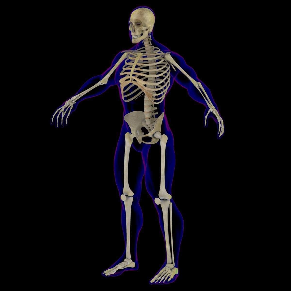 X Ray Male Skeleton 3d Model