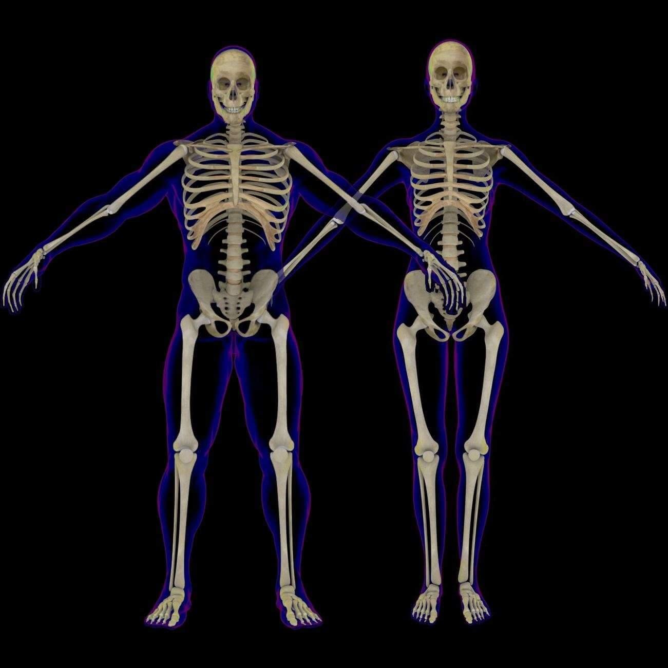 X Ray Skeleton Combo 3d Model