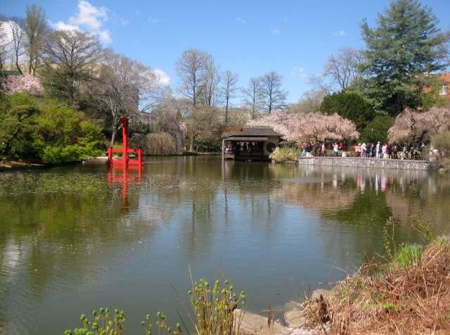 Across the pond at the Brooklyn Botanic Garden