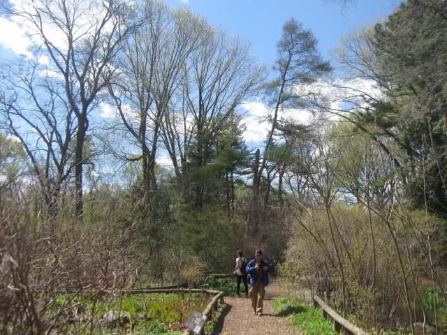 Native Flora Garden