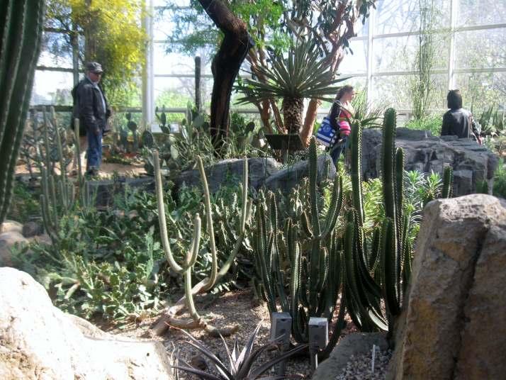 Desert Pavilion at the Brooklyn Botanic Garde