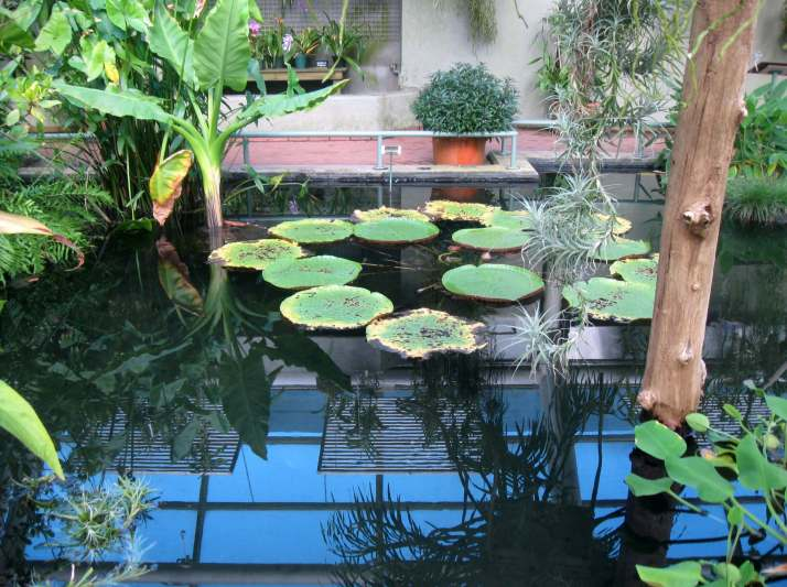 Aquatic House and Orchid Collection