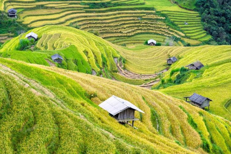Photo by Phan Dang Viet Tung from Pexels https://www.pexels.com/photo/agriculture-country-countryside-crop-572741/