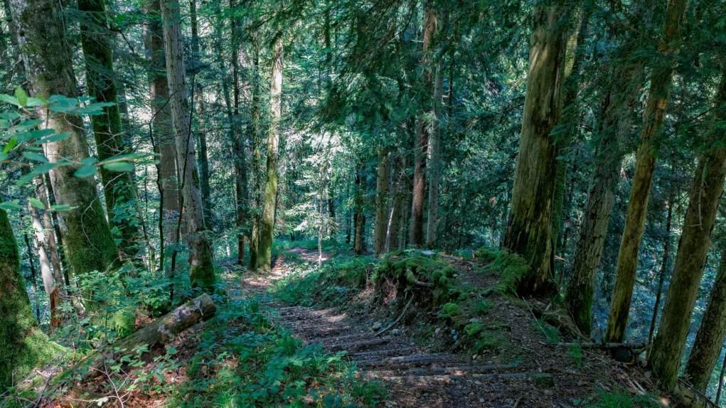 Holztreppen im Tobel