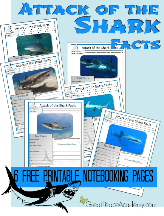 Attack of the Shark Facts Notebooking Pages at Great Peace Academy