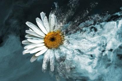 exploding daisy digital image