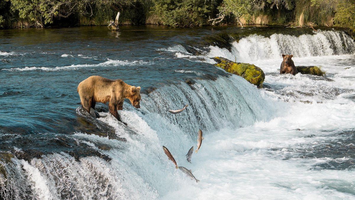 Exploring Bear Country – Katmai National Park