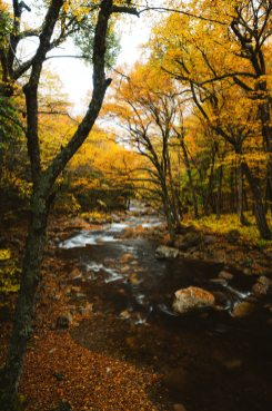 New England Fall Road Trip Ultimate Itinerary Renee Roaming Flume Gorge 2 White Mountains New Hampshire