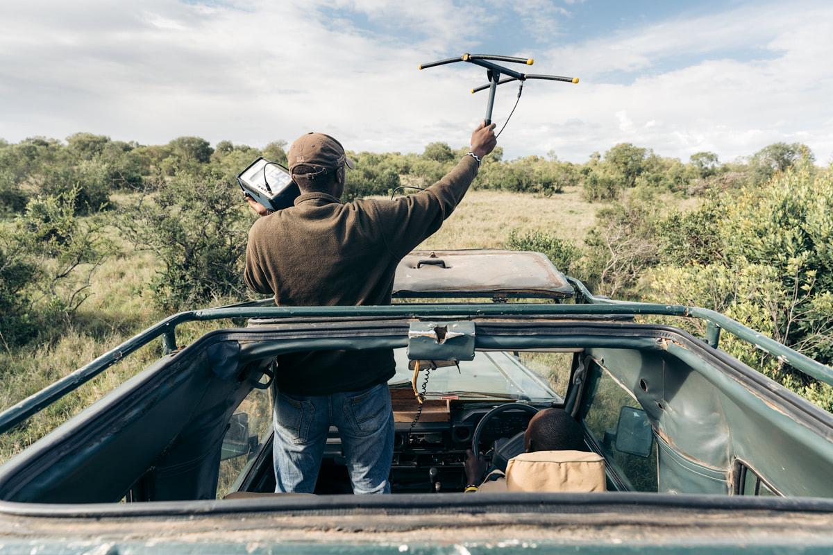 Ultimate Safari Adventure at Ol Pejeta Conservancy Kenya Lion Tracking Radar