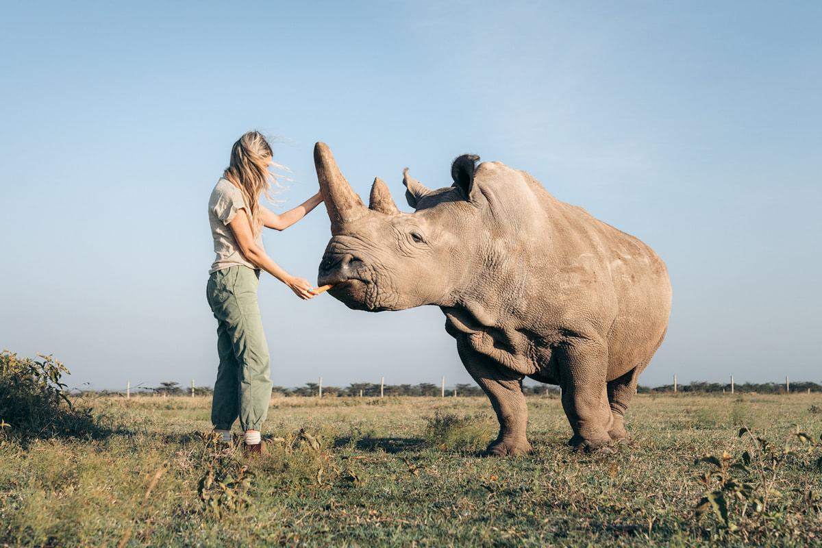Ultimate Safari Adventure at Ol Pejeta Conservancy Kenya Northern White Rhino Enclosure Feeding