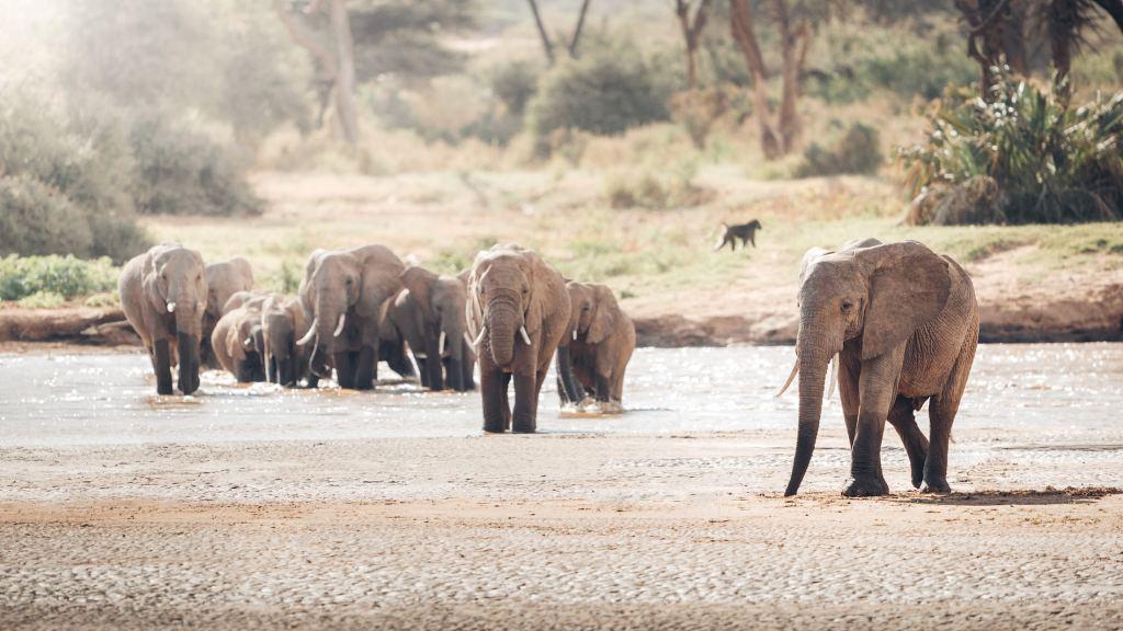 A Magical Stay at Ashnil Samburu Camp, Kenya