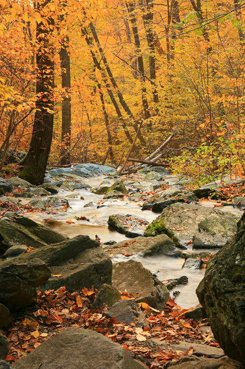 12 Best National Parks To Visit In The Fall - Shenandoah National Park Creek