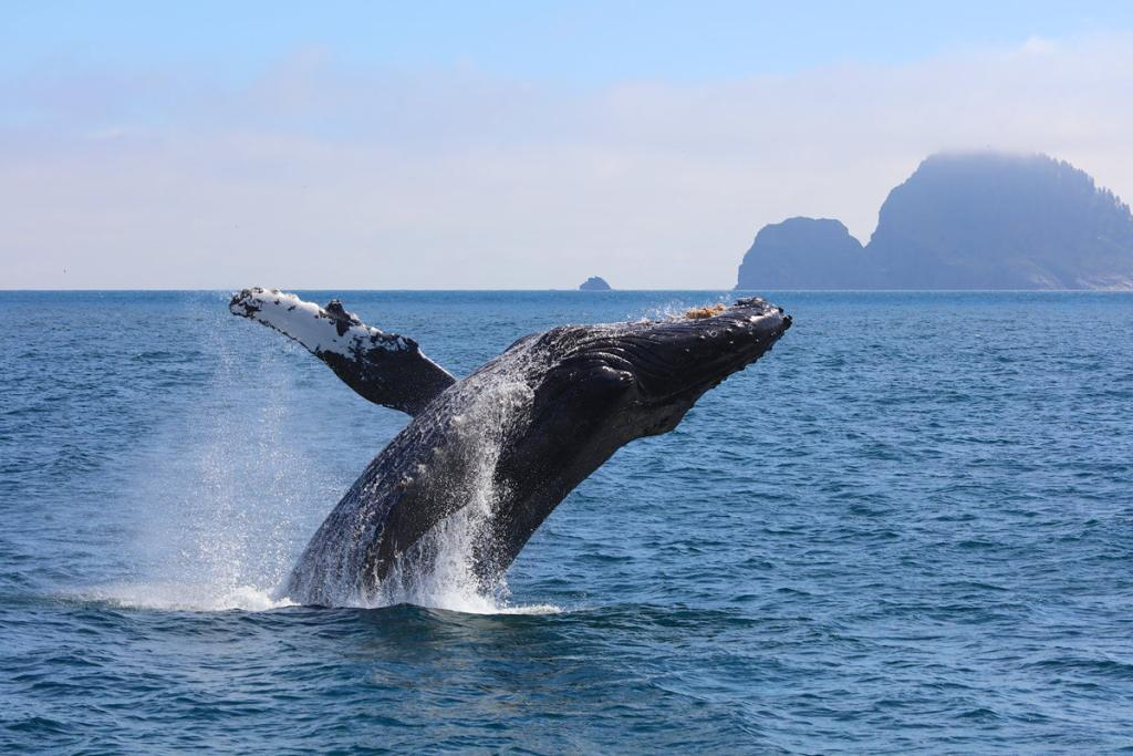 The Ultimate Guide to Exploring Kenai Fjords National Park - Whale Watching
