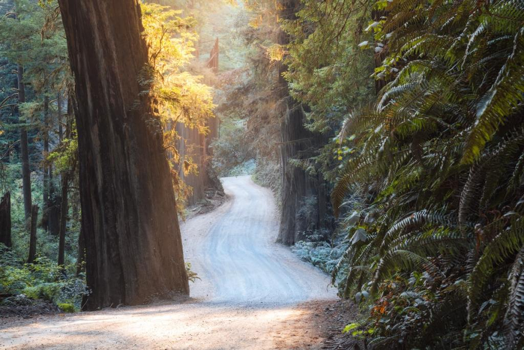 12 Best National Parks to Visit in Winter - Redwood State and National Parks Road