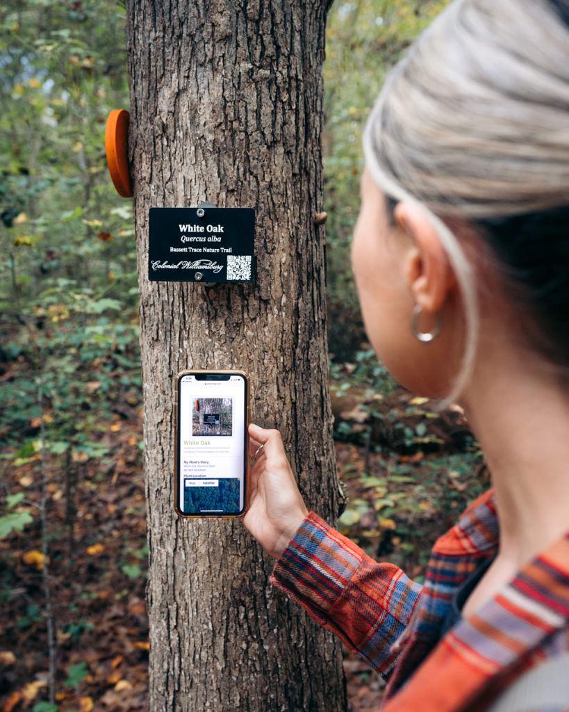 Bassett Trace Nature Trail Trees