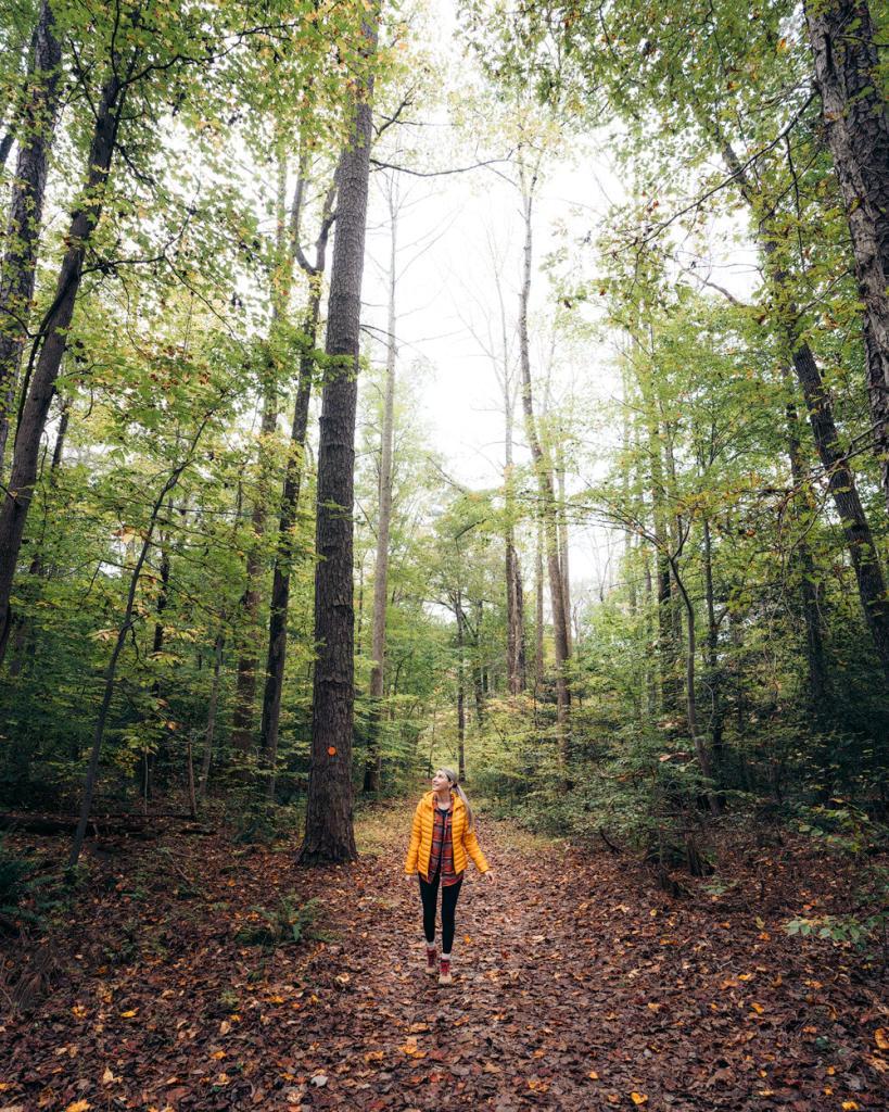 Williamsburg Virginia Guide and Itinerary - Bassett Trace Nature Trail Williamsburg