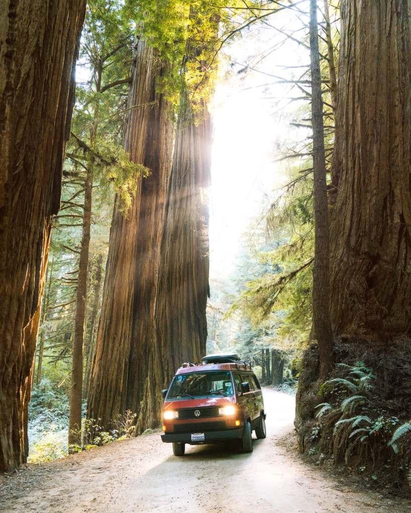 Best National Parks to Visit in Spring - Redwood National & State Park Spring Travel