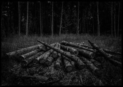 dark-forest-3
