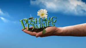 pushing daisies cancelled or renewed
