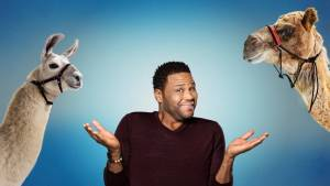 Animal Nation with Anthony Anderson Cancelled Or Renewed For Season 2?