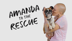 amanda to the rescue renewed for season 2