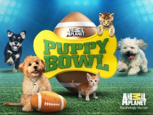 Puppy Bowl XVI Returns to Animal Planet