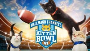 kitten bowl VIII returns