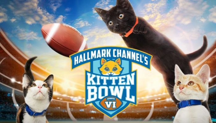 kitten bowl VII returns + premiere date