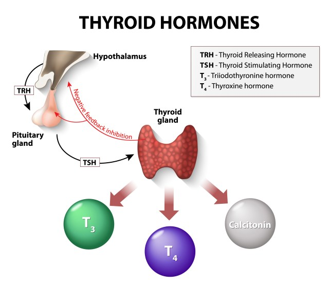 Thyroid Repalcement